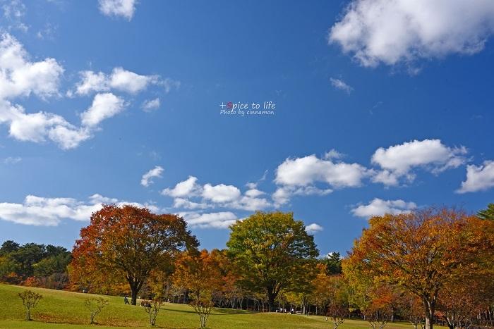 お気に入りの公園_f0326278_00200773.jpg