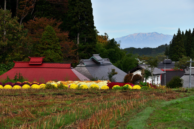 菊畑が綺麗_d0341880_20045012.jpg