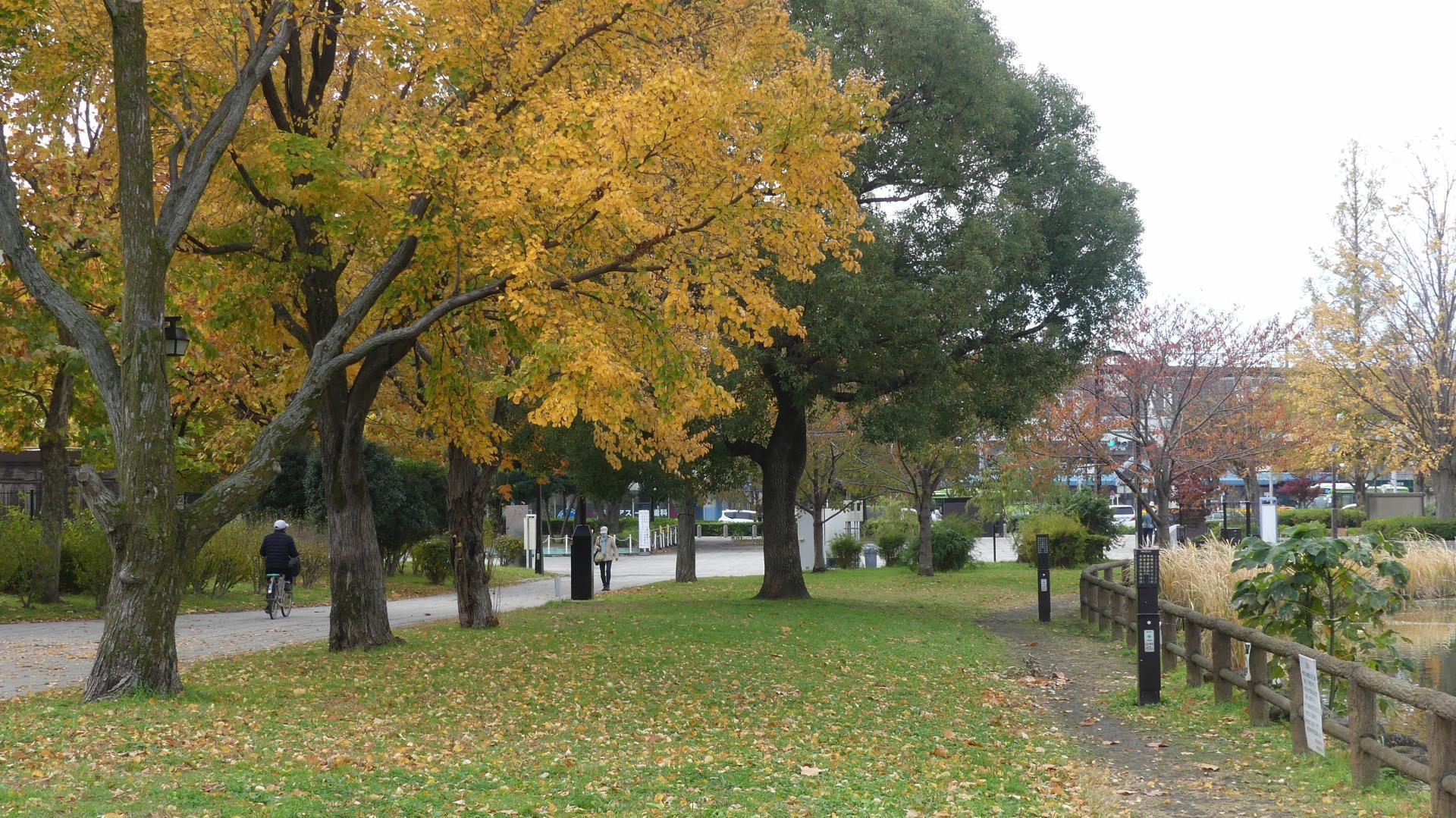 秋色の散歩道_a0185081_23045474.jpg