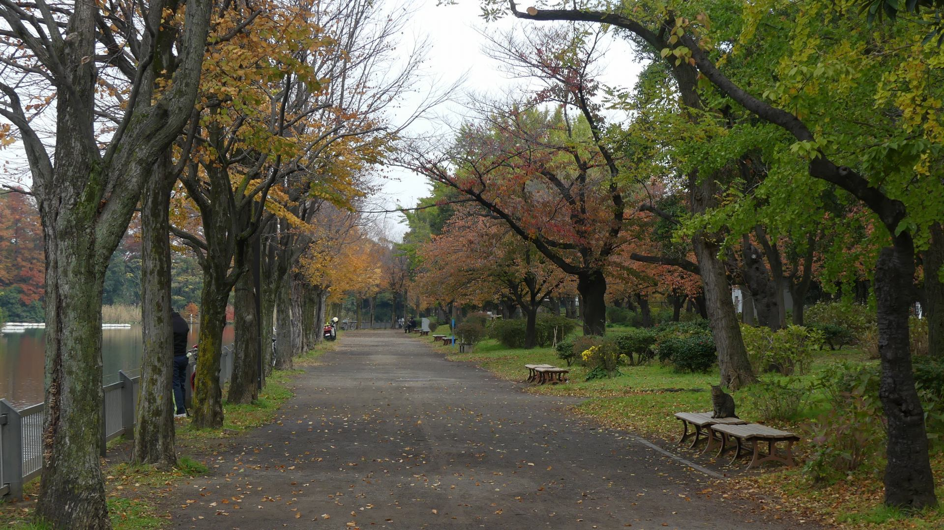 秋色の散歩道_a0185081_23051063.jpg