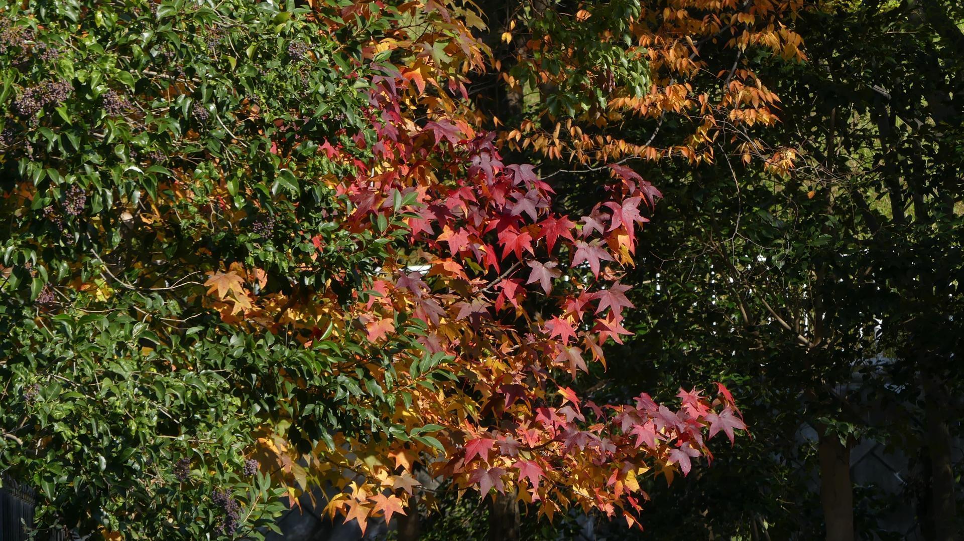 秋色の散歩道_a0185081_23081787.jpg