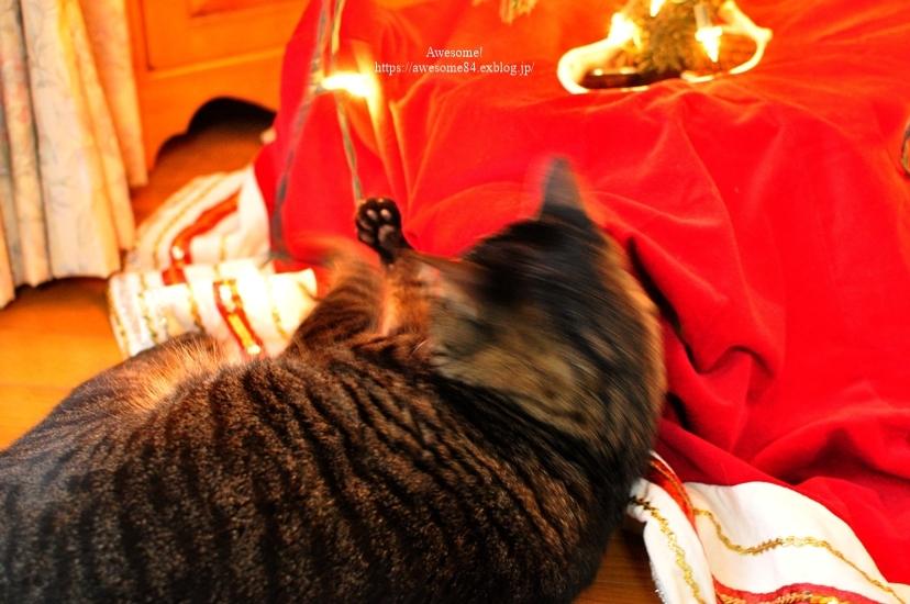今日のネコ様とMUJIカレーランチ_e0359481_17433572.jpg