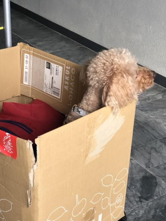 2019年11月24日エレベーターに乗るのが疲れる_b0098584_20044093.jpeg