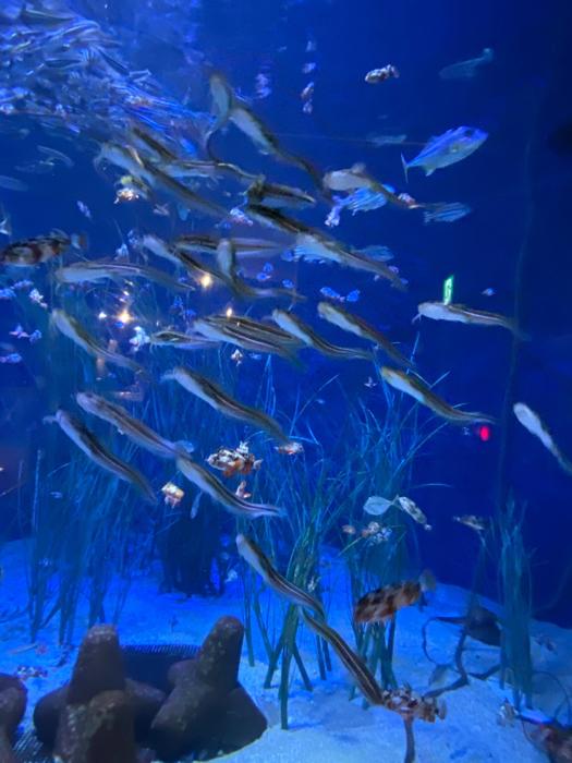 竹島水族館に八百富神社、蒲郡って初めて来たけど、結構楽しい〜_b0175688_21004922.jpg