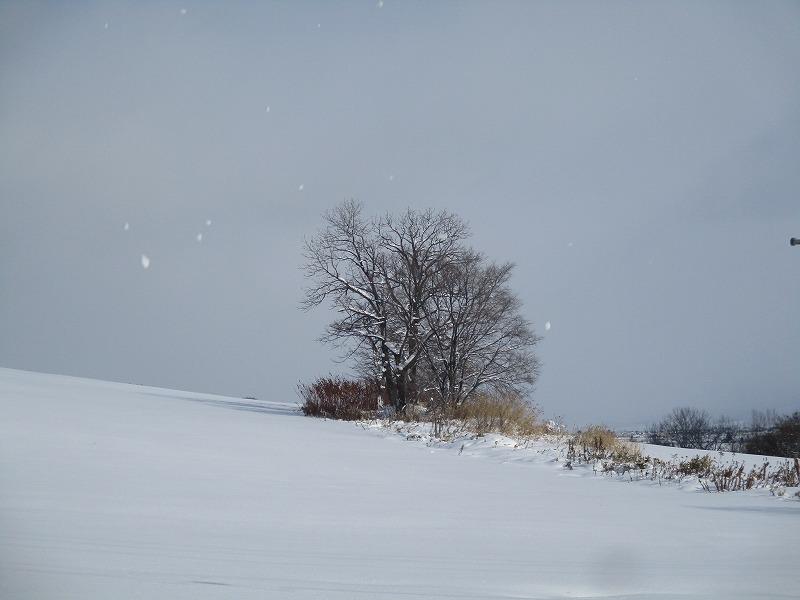 11月25日(月)・・・十勝岳温泉_f0202703_02141987.jpg