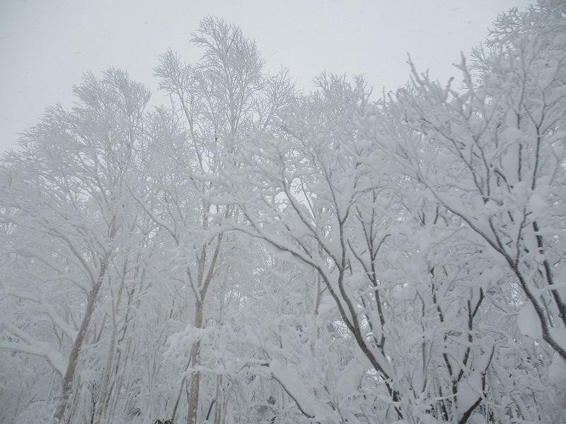 11月25日(月)・・・十勝岳温泉_f0202703_02215392.jpg