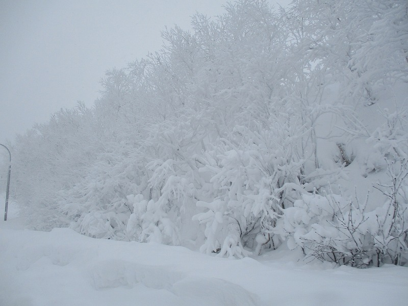 11月25日(月)・・・十勝岳温泉_f0202703_02231965.jpg
