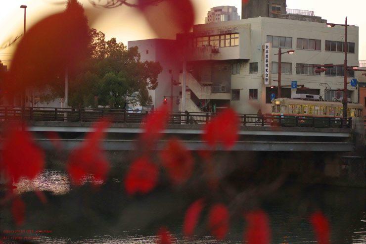 紅い桜を_d0309612_06132867.jpg