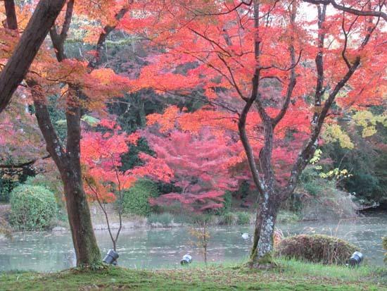 紅葉が盛り 植物園_e0048413_20405322.jpg