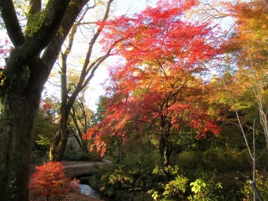紅葉が盛り 植物園_e0048413_20405805.jpg