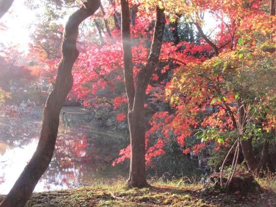 紅葉が盛り 植物園_e0048413_20410344.jpg