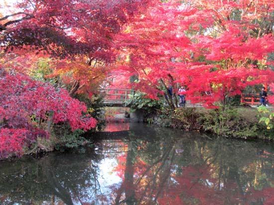 紅葉が盛り 植物園_e0048413_20411924.jpg