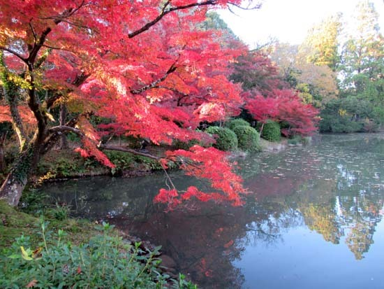 紅葉が盛り 植物園_e0048413_20413225.jpg