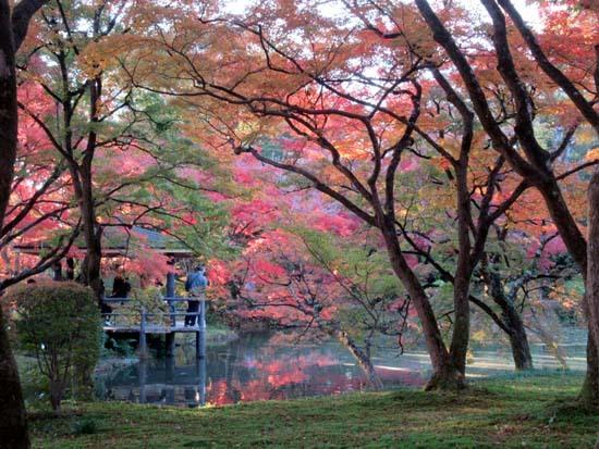 紅葉が盛り 植物園_e0048413_20413293.jpg
