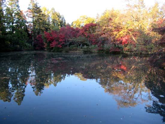 紅葉が盛り 植物園_e0048413_20414508.jpg