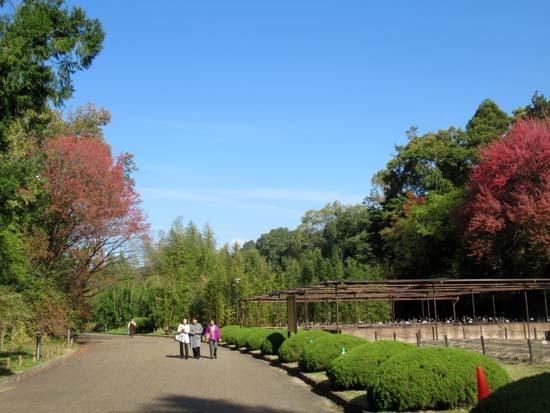 紅葉が盛り 植物園_e0048413_20414705.jpg
