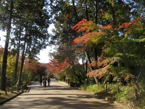 紅葉が盛り 植物園_e0048413_20415540.jpg