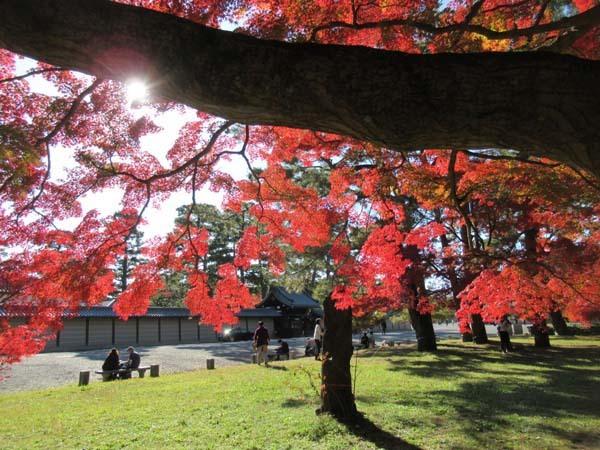 紅葉が盛り 京都御苑_e0048413_22242916.jpg