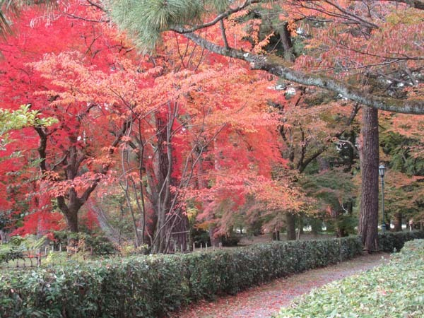 紅葉が盛り 京都御苑_e0048413_22243471.jpg