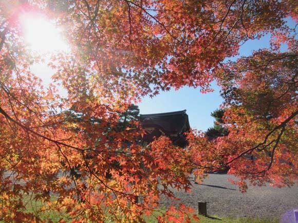紅葉が盛り 京都御苑_e0048413_22245536.jpg