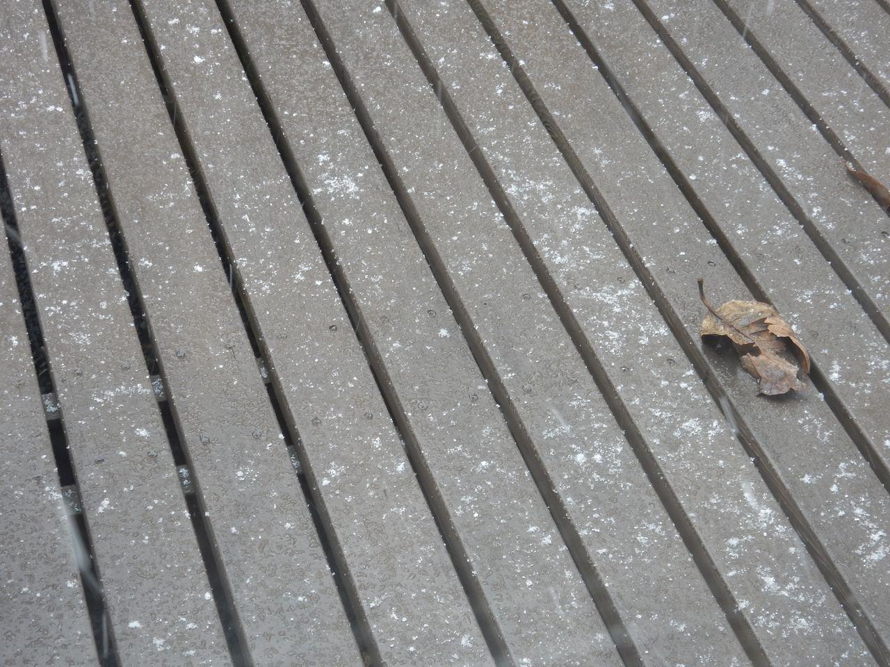 雨から雪へ(「高校生物」またまた増刷)_c0025115_23033993.jpg
