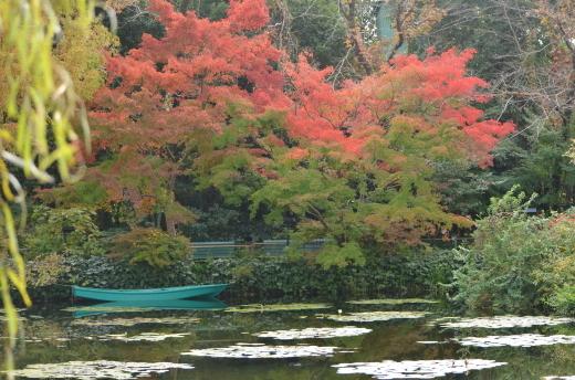 紅葉が見ごろです♪_e0135518_14494798.jpg