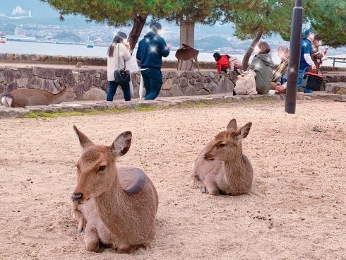 宮島に行ってきました_f0376319_15293812.jpeg