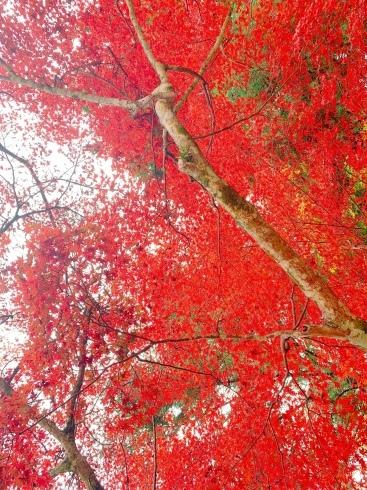 宮島に行ってきました_f0376319_15340030.jpeg
