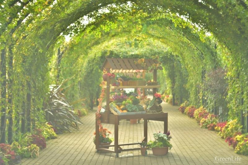 ガレージレンズで横浜イングリッシュガーデン 〜秋の収穫祭〜_f0321522_10203717.jpg