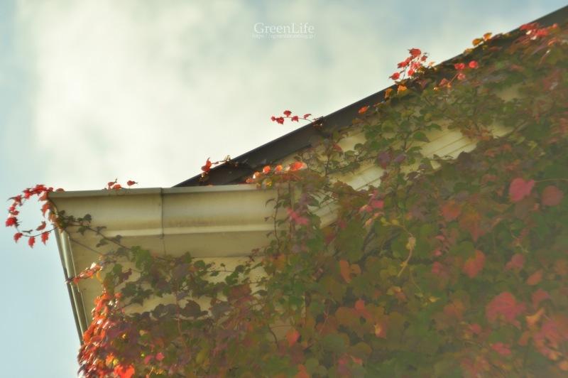 ガレージレンズで横浜イングリッシュガーデン 〜秋の収穫祭〜_f0321522_10212674.jpg