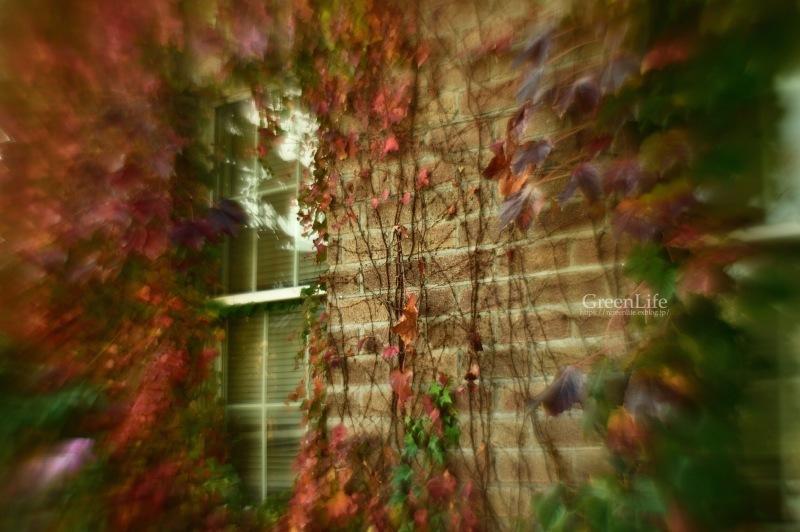 ガレージレンズで横浜イングリッシュガーデン 〜秋の収穫祭〜_f0321522_10541223.jpg