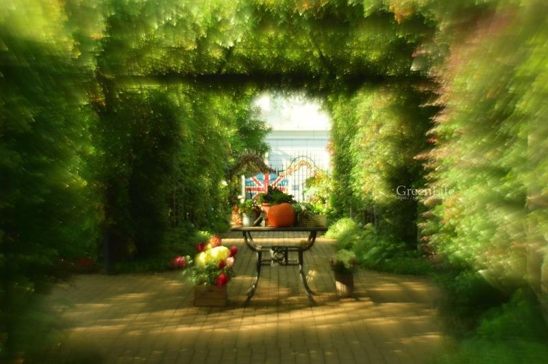 ガレージレンズで横浜イングリッシュガーデン 〜秋の収穫祭〜_f0321522_10541918.jpg