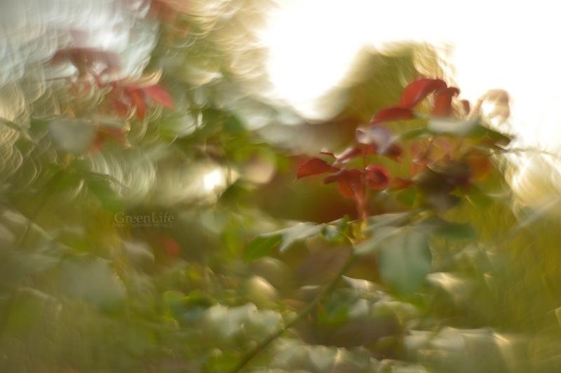 ガレージレンズで横浜イングリッシュガーデン 〜秋の収穫祭〜_f0321522_11130091.jpg