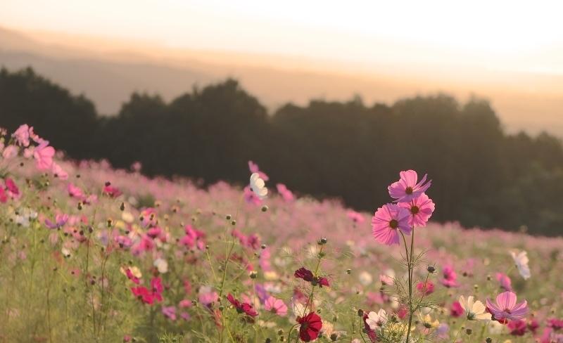 ブログテーマ「秋と言えば紅葉!みんなに見せたい秋の風景ショット2019」_f0357923_18334184.jpg