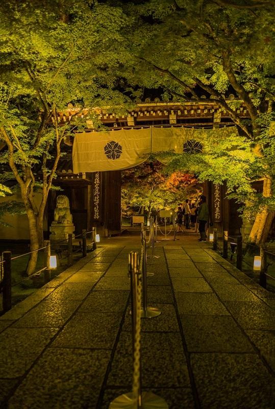 2019京都紅葉~永観堂ライトアップ_e0363038_13305545.jpg
