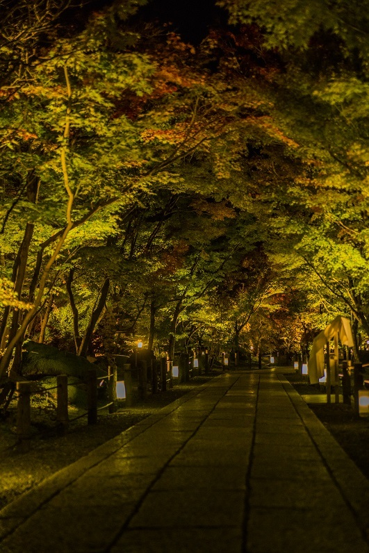 2019京都紅葉~永観堂ライトアップ_e0363038_13311751.jpg