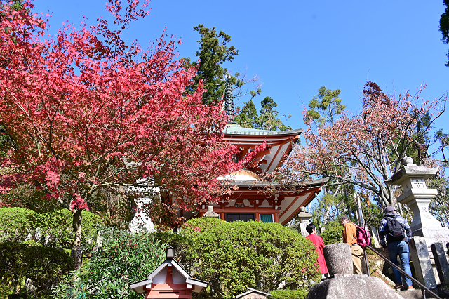 京都 鞍馬山_b0249247_23040585.jpg