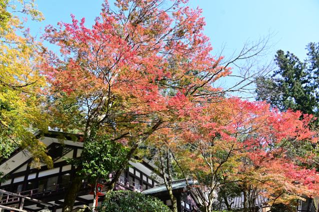 京都 鞍馬山_b0249247_23041225.jpg