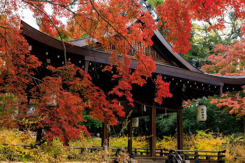 紅葉が彩る京都2019 萩とモミジの紅葉(梨木神社)_f0155048_23554787.jpg