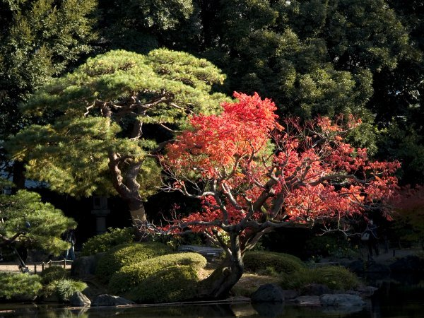 旧古河庭園 薔薇と紅葉(4) Olympus E-1_e0129750_17132925.jpg
