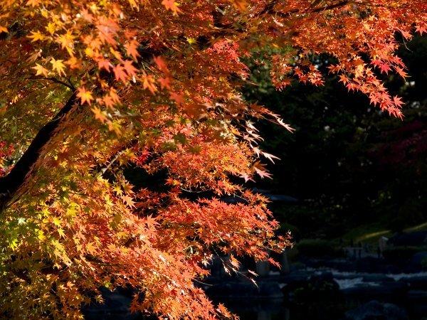 旧古河庭園 薔薇と紅葉(4) Olympus E-1_e0129750_17134343.jpg