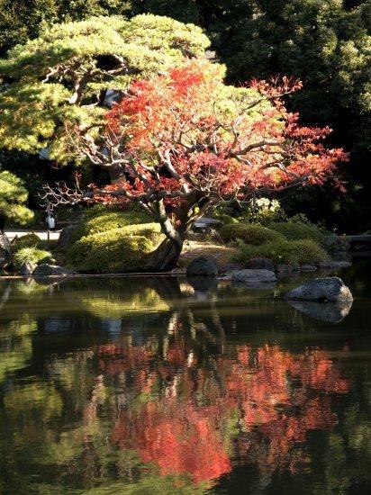 旧古河庭園 薔薇と紅葉(4) Olympus E-1_e0129750_17135862.jpg