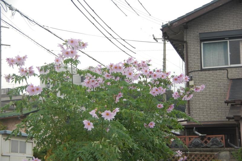 15カ月目で 我が家の台風被害復旧工事が始まりそう_c0108460_13485547.jpg