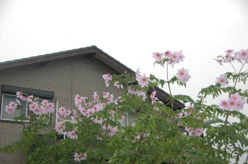 15カ月目で 我が家の台風被害復旧工事が始まりそう_c0108460_13511583.jpg