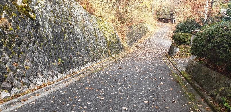 枯れ葉散る道も風情か..._b0222066_07565066.jpg