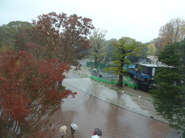 久し振り、、雨の上野_d0193569_07464937.jpg