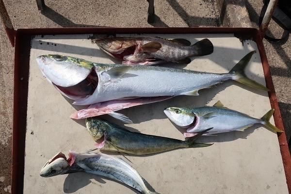 トシコ3さんの釣果♬_a0077071_15153562.jpg