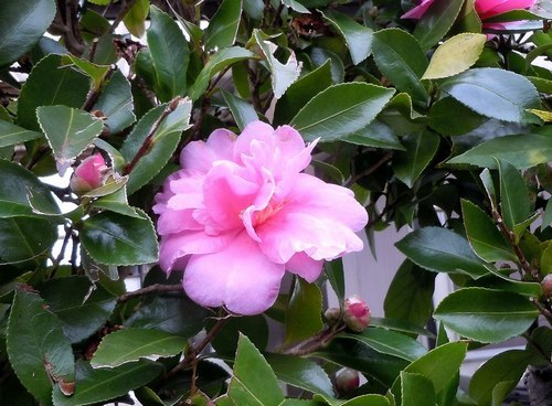 路傍の花、樹々の鳥(357) ~ 晩秋に咲く ~_b0102572_09284960.jpg