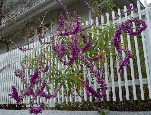 路傍の花、樹々の鳥(357) ~ 晩秋に咲く ~_b0102572_09293539.jpg