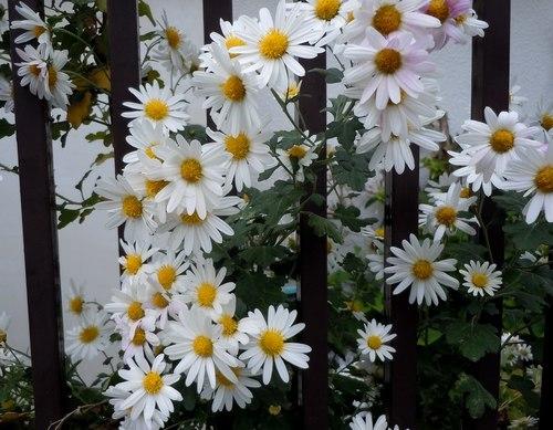 路傍の花、樹々の鳥(357) ~ 晩秋に咲く ~_b0102572_09301177.jpg
